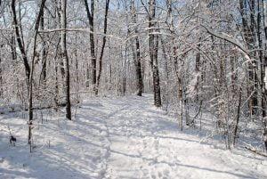 snow 2384483 1920